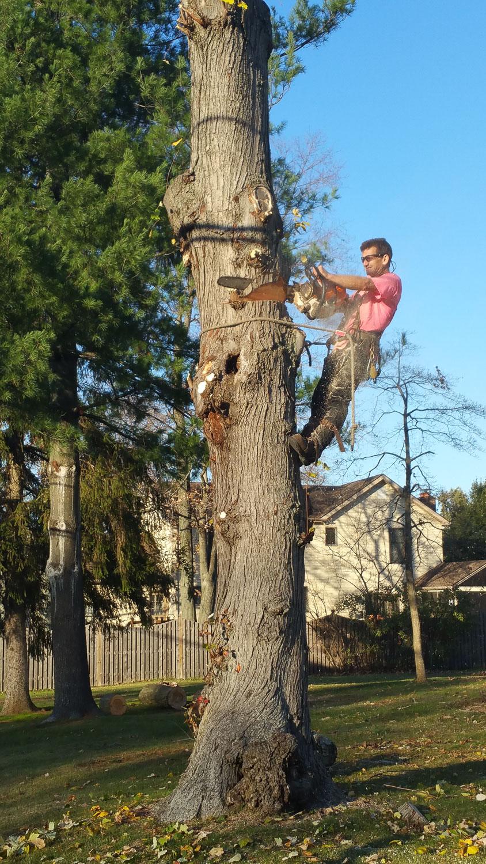 treeladypro_20151116_152522