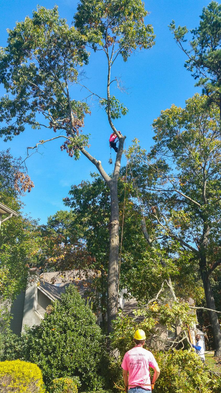 treeladypro_20151021_110702