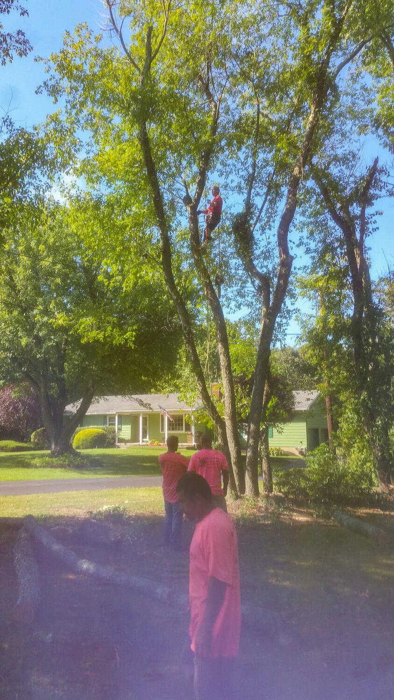 treeladypro_20160830_095901