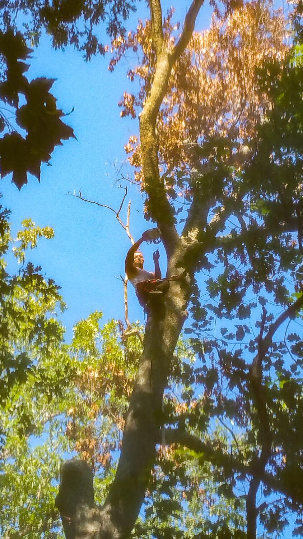 treeladypro_20160923_145130