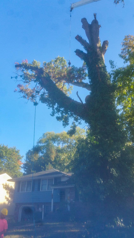 treeladypro_20161021_154752